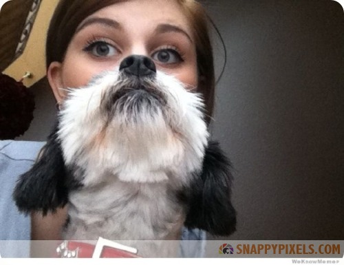 attractive-dog-beards-5