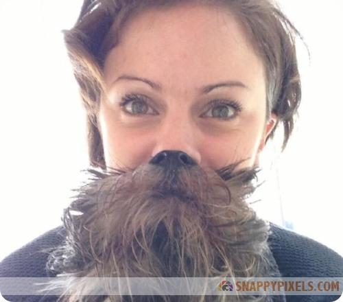attractive-dog-beards-6
