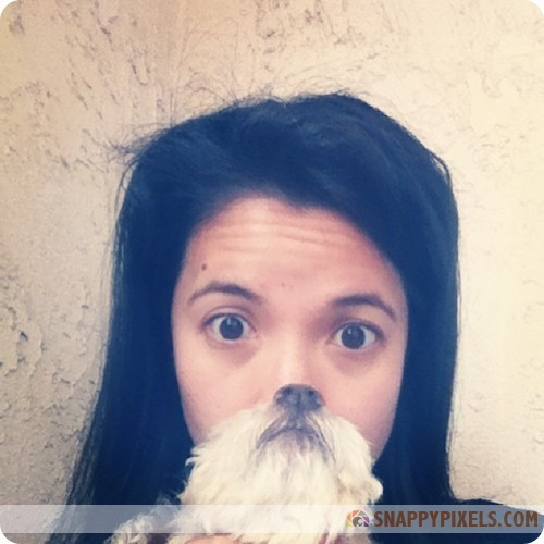 attractive-dog-beards-7