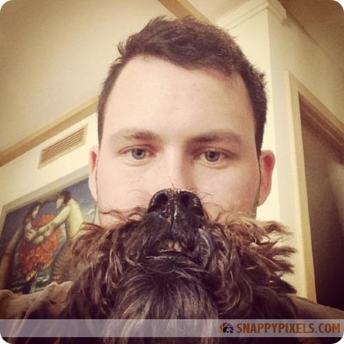 attractive-dog-beards-9
