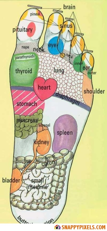Foot Reflexology Illustration