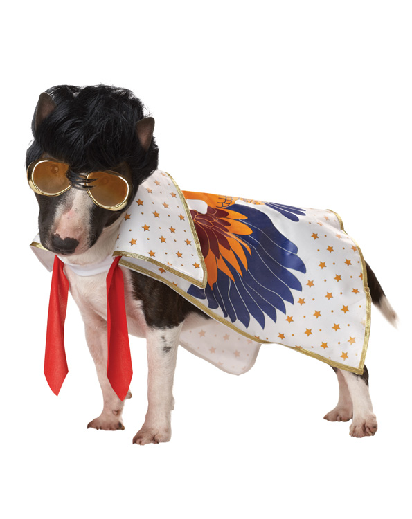 dogcost22