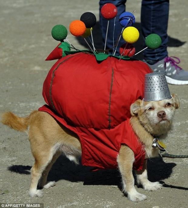 dogcost29