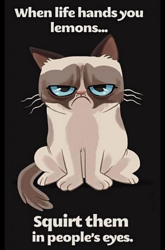 grumpy-cat-meme-sadden-your-day (25)