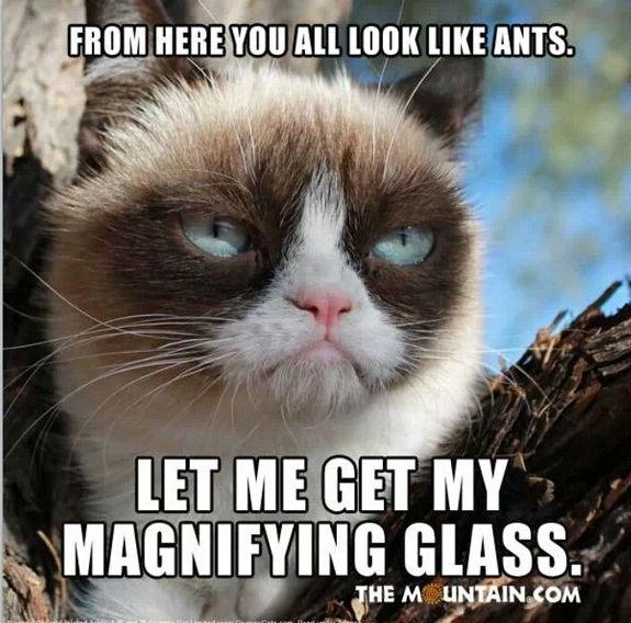 grumpy-cat-meme-sadden-your-day (4)