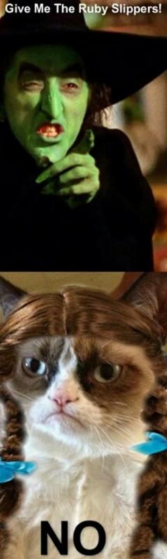 grumpy-cat-meme-sadden-your-day (9)