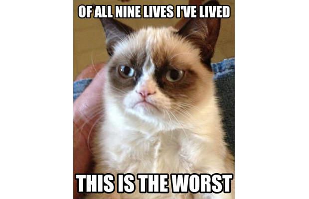 great-grumpy-cat-memes-11