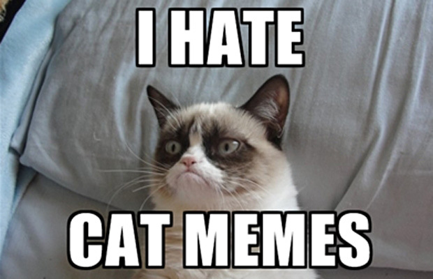 31 Great Grumpy Cat Memes That Will Make You Less Grumpy