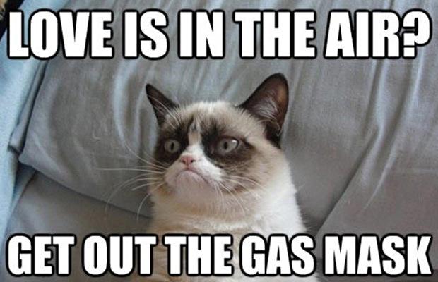 great-grumpy-cat-memes-7