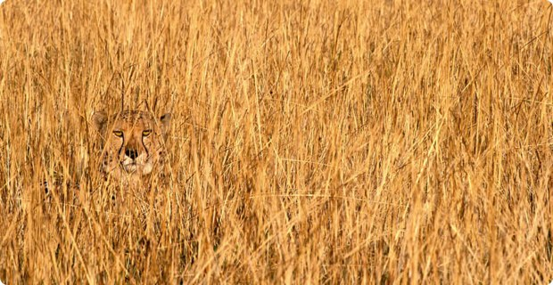 clever-camouflaged-animals-17