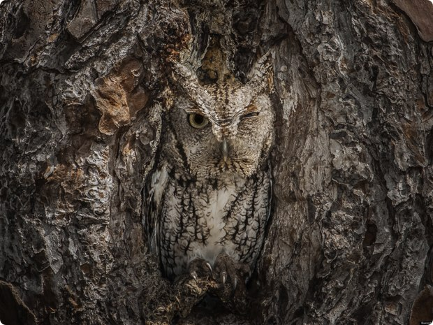 clever-camouflaged-animals-34