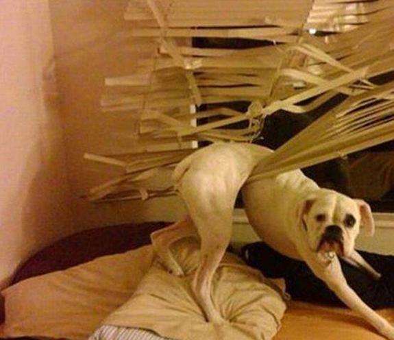 funny-sad-dogs-stuck-1