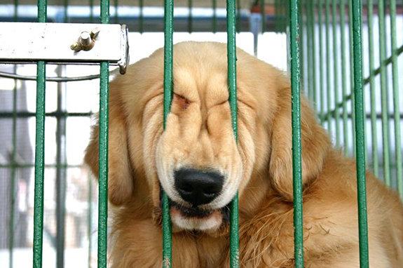 funny-sad-dogs-stuck-11