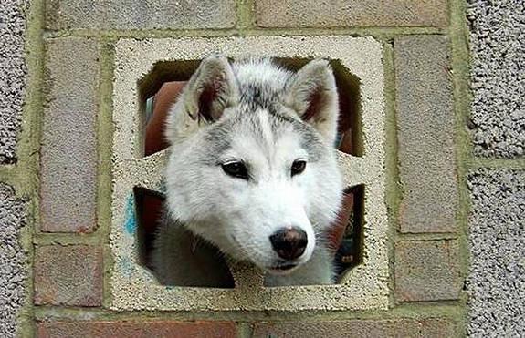 funny-sad-dogs-stuck-13