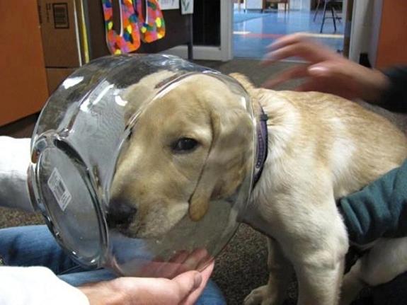 funny-sad-dogs-stuck-17