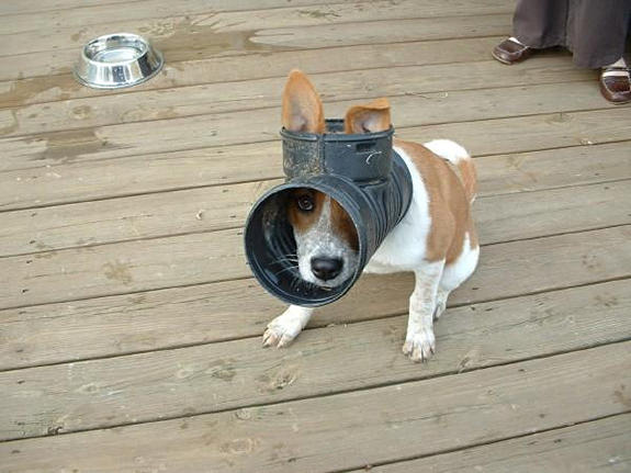 funny-sad-dogs-stuck-20