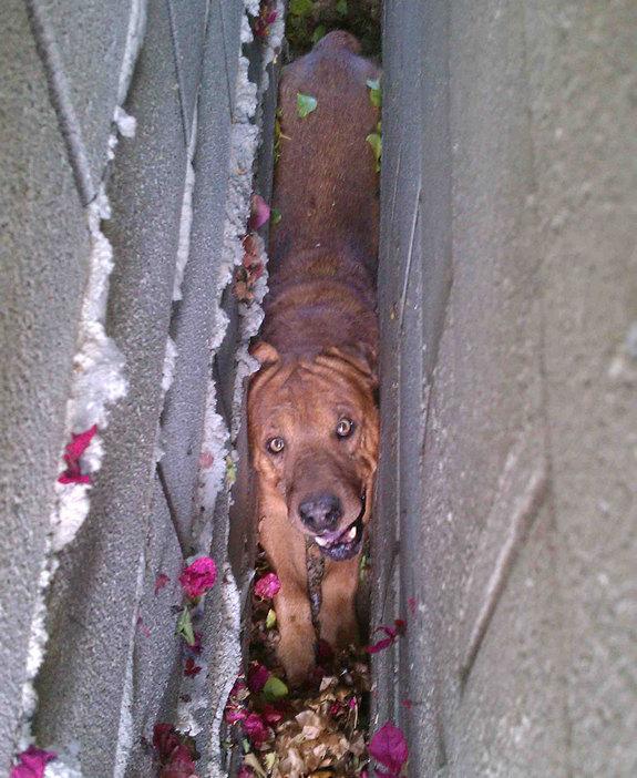 funny-sad-dogs-stuck-24