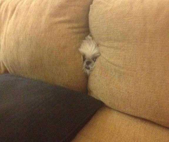 funny-sad-dogs-stuck-4