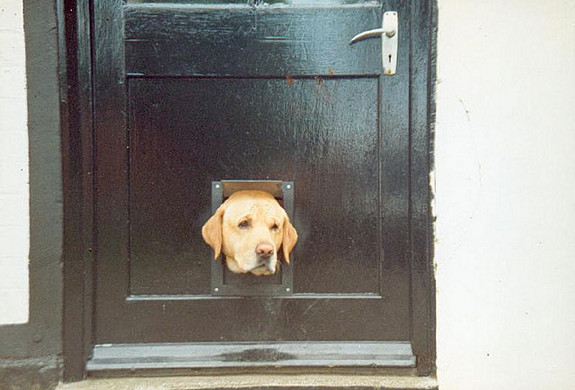 funny-sad-dogs-stuck-7