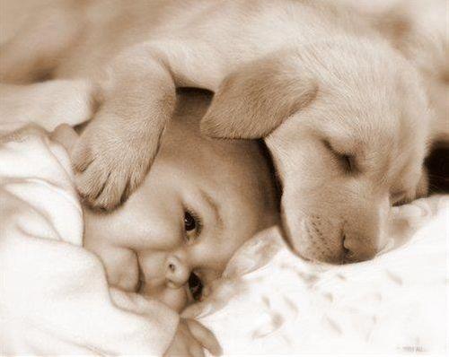 pictures-puppies-babies-1