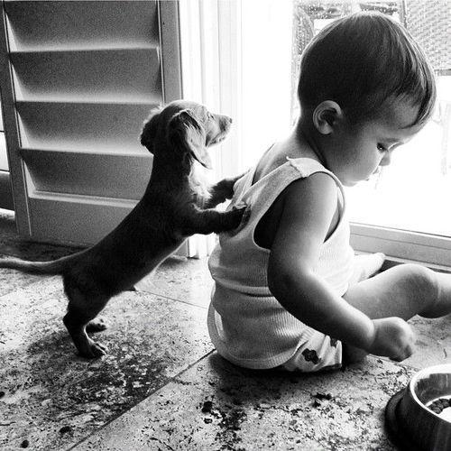 pictures-puppies-babies-11