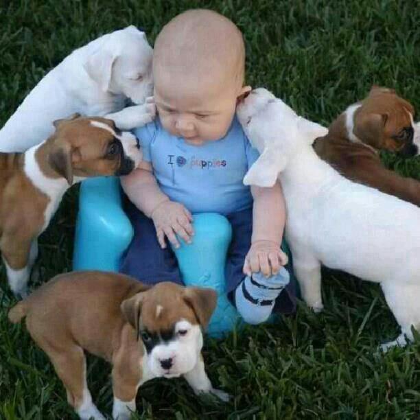 pictures-puppies-babies-12