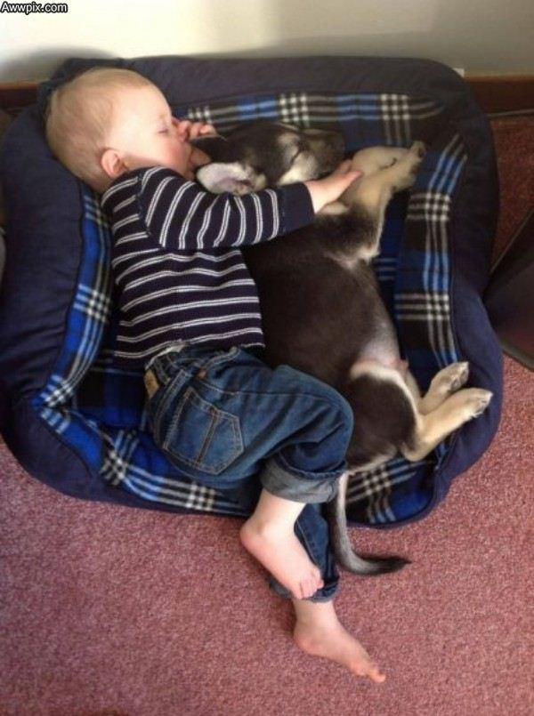 pictures-puppies-babies-14