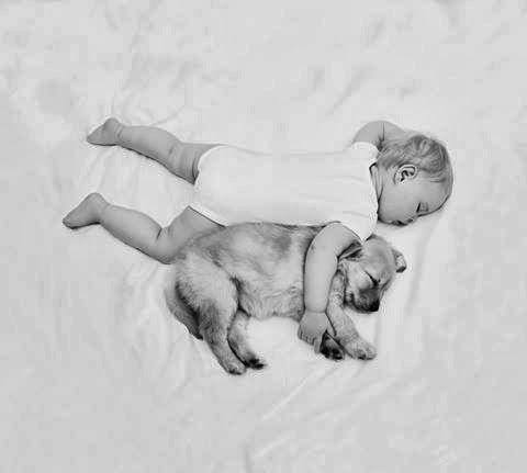 pictures-puppies-babies-17