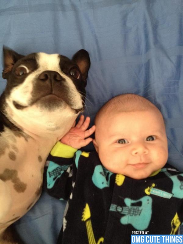 pictures-puppies-babies-18