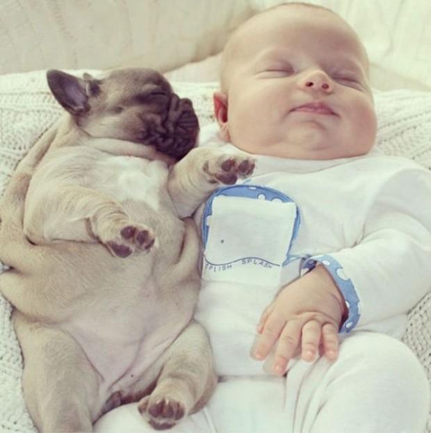 pictures-puppies-babies-20