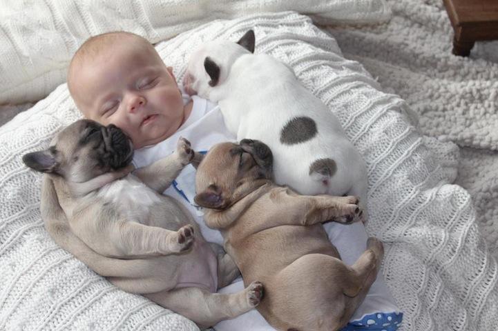 pictures-puppies-babies-21