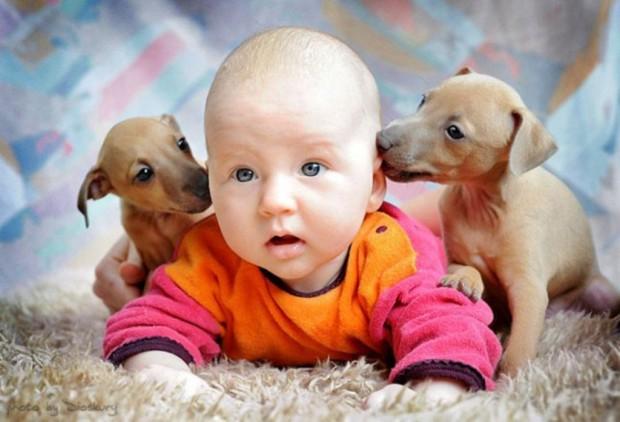 pictures-puppies-babies-22