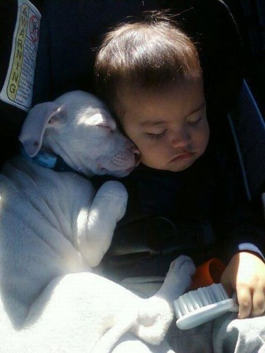 pictures-puppies-babies-23