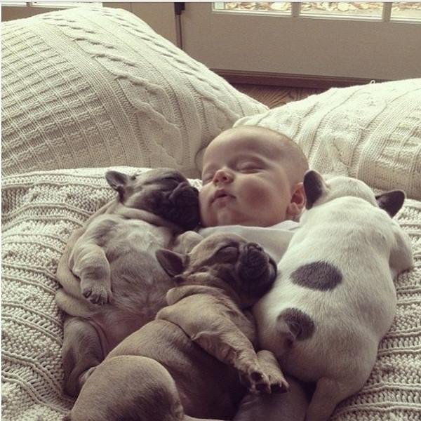 pictures-puppies-babies-24