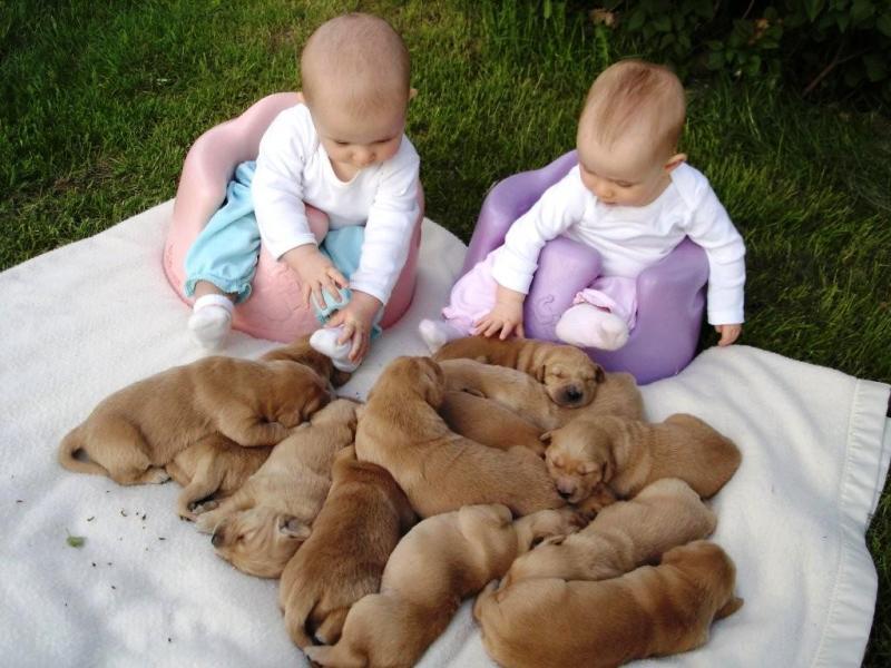 pictures-puppies-babies-28
