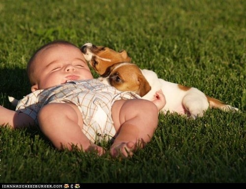 pictures-puppies-babies-9