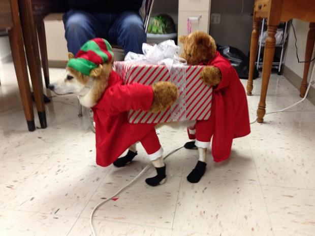 DOg-Costume1