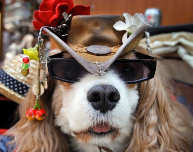 Dogs Wearing Sunglasses_8