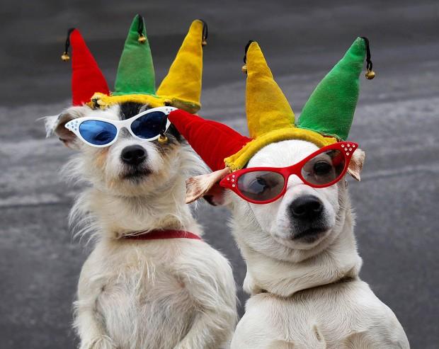 Double terriers
