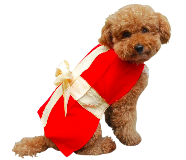 Gift-box-costume-for-dogs