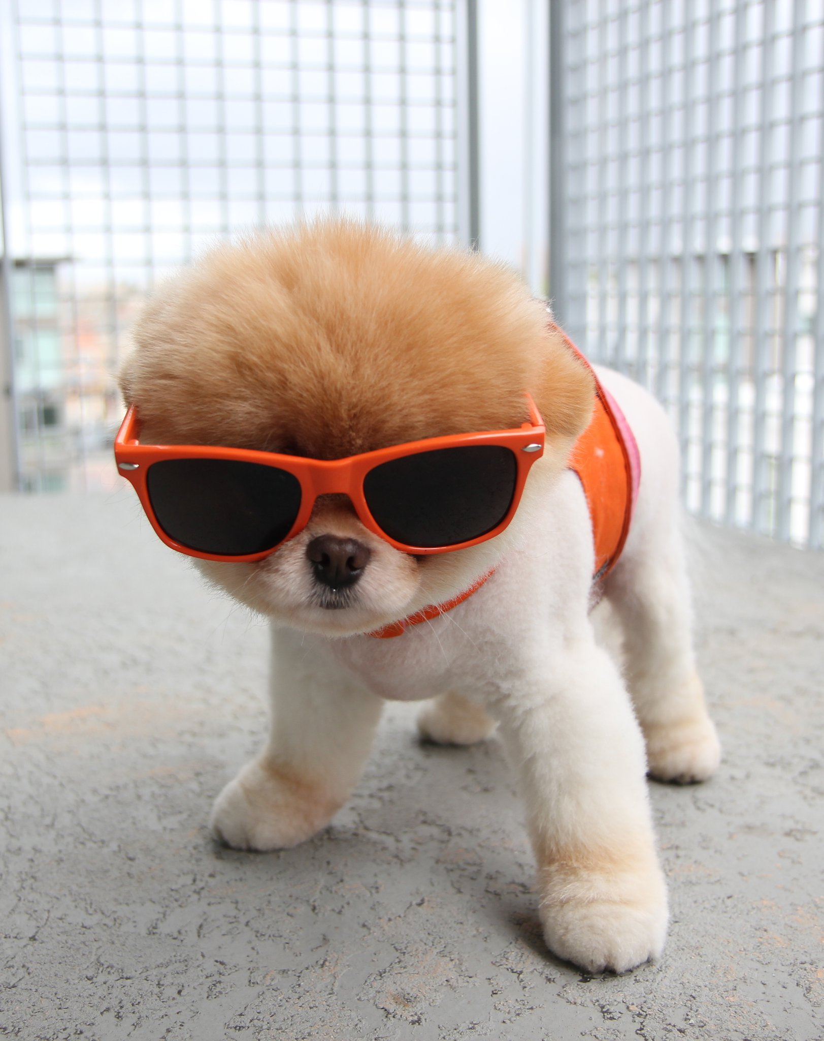 25 Extremely Cool Dogs with Sunglasses
