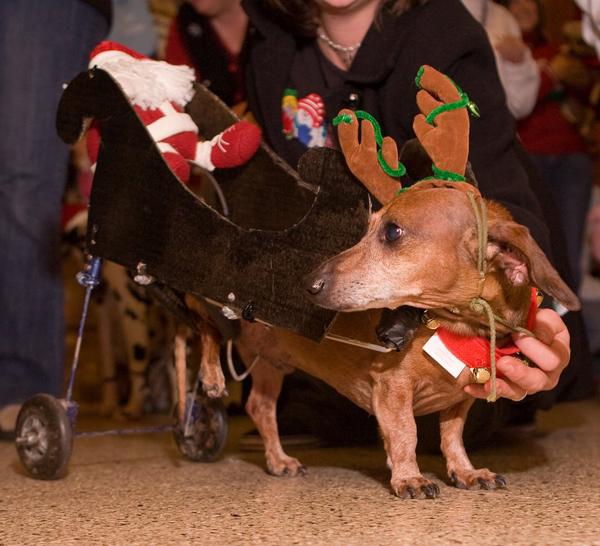 Reindeer-with-Sleigh-Dog-Costume