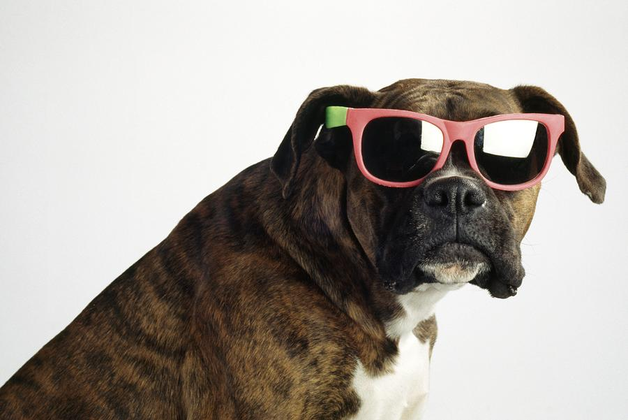boxer-wearing-sunglasses-ron-nickel