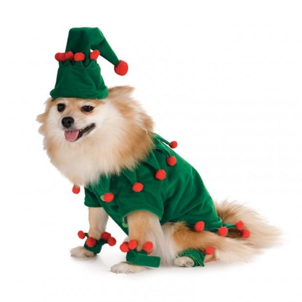 corgi elf