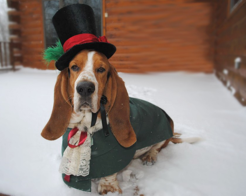 31 Adorable Holiday Pet Costumes for Christmas