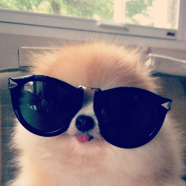 fuzzy-puppy-wearing-sunglasses