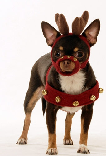 gal-holiday-pets-01-jpg