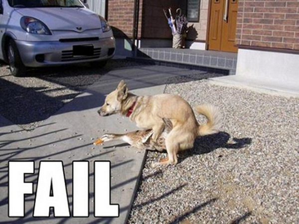 funny-animal-pictures-10