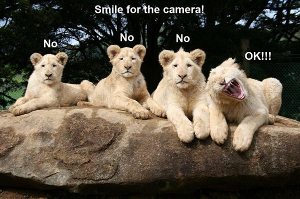 funny-animal-pictures-20