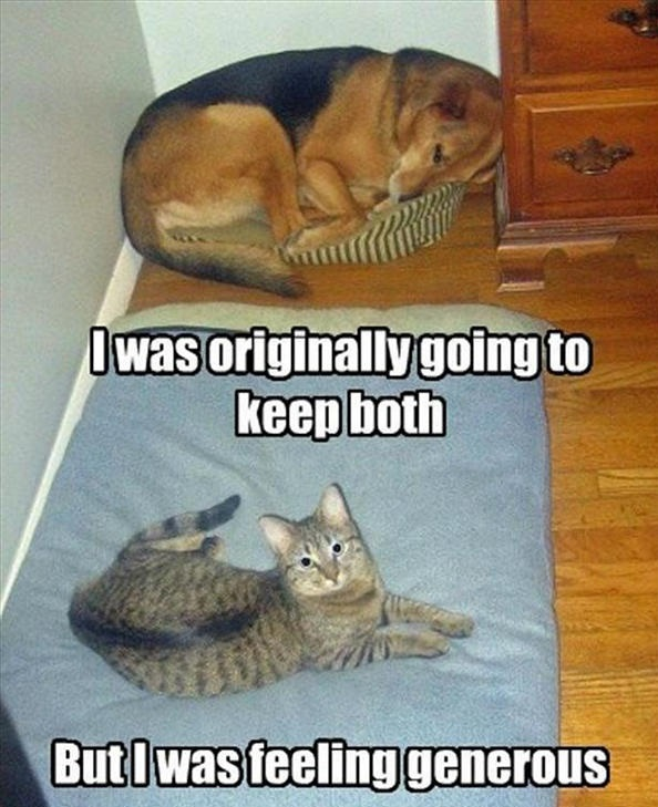 funny-animal-pictures-42